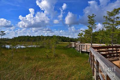 Photograph - 51- Florida Everglades by Joseph Keane