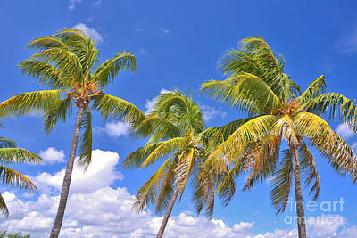 Photograph - 52- Palms In Paradise by Joseph Keane