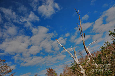 Photograph - 53- Everglades Afternoon by Joseph Keane