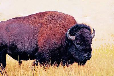 Bison Digital Art - Bison by Anna J Davis