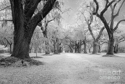 Photograph - Spooky Live Oak Tree Allee by Dale Powell