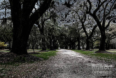 Photograph - Halloween Path by Dale Powell
