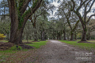 Photograph - Walk The Path by Dale Powell