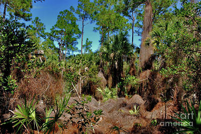 Photograph - 55- Everglades Afternoon by Joseph Keane