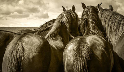 Photograph - #5815 - Mortana Morgan Mares by Heidi Osgood-Metcalf