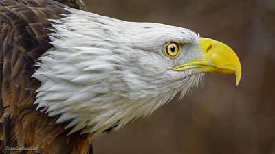 Photograph - American Bald Eagle by LeeAnn McLaneGoetz McLaneGoetzStudioLLCcom