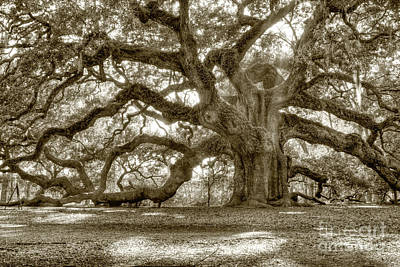 Shadows Photograph - Angel Oak Live Oak Tree by Dustin K Ryan