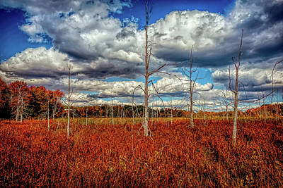 Photograph - Autumn Landscape by Lilia D