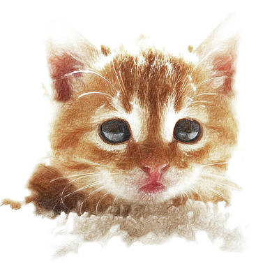 Beautiful Kitten Art Print