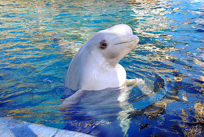 Wyland Photograph - Beluga Whale by Thea Wolff