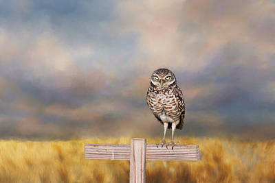 Photograph - Burrowing Owl  by Kim Hojnacki