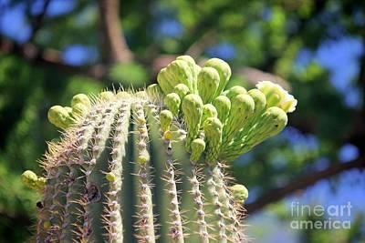 Photograph - Cactus Garden by Douglas Miller