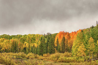 Photograph - Colorado Fall Foliage 1 by Victor Culpepper