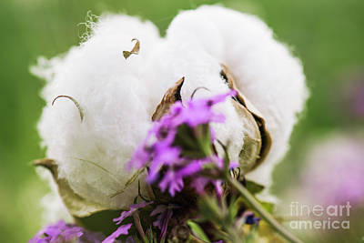 Photograph - Cotton Field In The Countryside. by Rob D