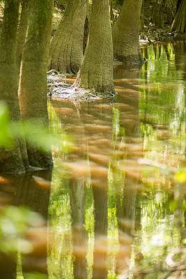 Pasta Al Dente - cypress forest and swamp of Congaree National Park in South Caro by Alex Grichenko