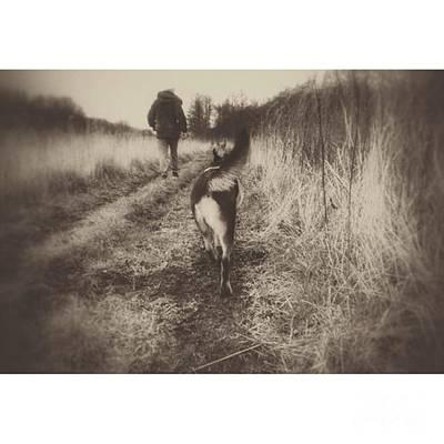 Gsd Photograph - #dogs #petstagram #gsd #germanshepherd by YoursByShores Isabella Shores