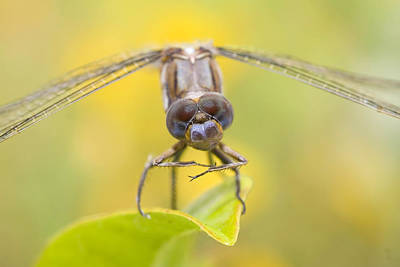 Dragonfly Eyes Photograph - Dragonfly by Andre Goncalves