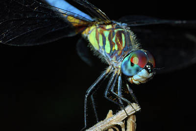 Photograph - Dragonfly by Larah McElroy
