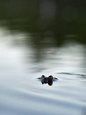 Photograph - European Toad by Jouko Lehto
