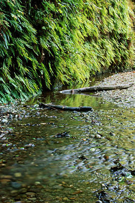 Kitchen Spices And Herbs - Fern Canyon by Soli Deo Gloria Wilderness And Wildlife Photography