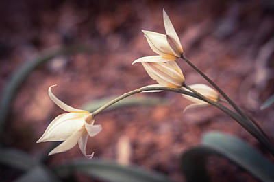 Photograph - First Spring Flowers by Lilia D