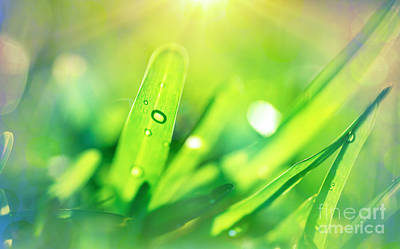 Photograph - Fresh Green Grass Background by Anna Om