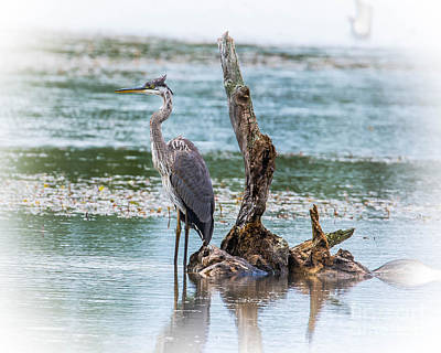 Photograph - Great Blue Heron by Ronald Grogan