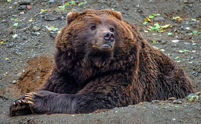Photograph - Grizzly Bear 2 by Brian Stevens