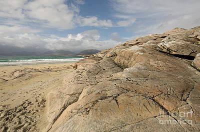 Scotland Photograph - Luskentyre Beach by Nichola Denny