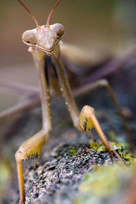Mantis Art Print by Andre Goncalves