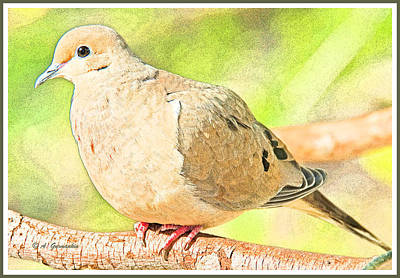Mourning Dove Animal Portrait Art Print