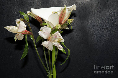 Photograph - Nice Flowers by Elvira Ladocki