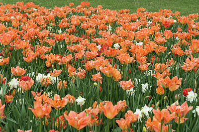 Typography Tees - Ottawa Ontario Tulip Festival 9 by Bob Corson