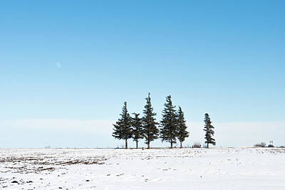 Photograph - 6 Pines And The Moon by Troy Stapek