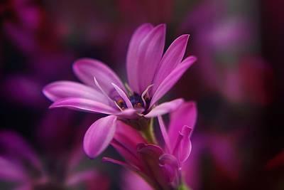 Pink Flower Original by Ralph Klein