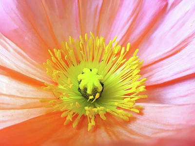Photograph - Poppy by Tiffany Erdman