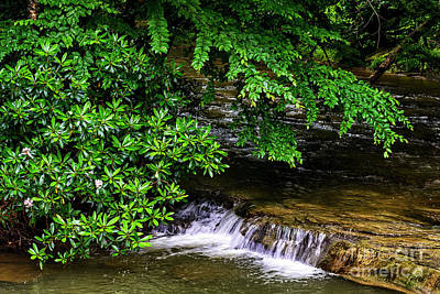 Photograph - Rhododendron And Waterfall by Thomas R Fletcher