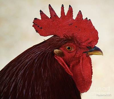 Photograph - Rooster  by Paulette Thomas