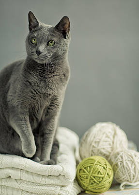 Royalty-Free and Rights-Managed Images - Russian Blue by Nailia Schwarz