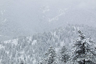 Photograph - Snowstorm In The Pike National Forest by Steve Krull