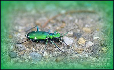 Photograph - 6-spotted Green Tiger Beetle by Deb Badt-Covell