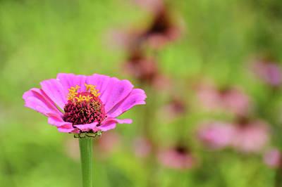 Photograph - Summer Garden by JAMART Photography