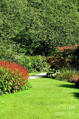 Photograph - Summer Garden by Tom Gowanlock