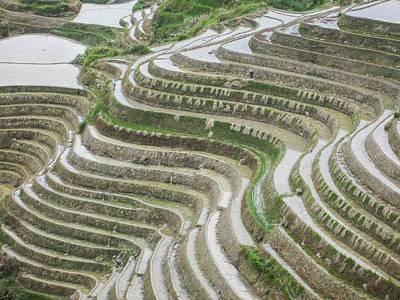 Photograph - Terrace Fields Scenery In Spring by Carl Ning