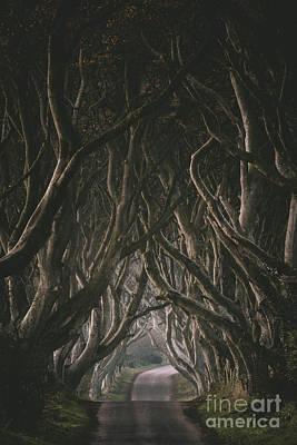 Photograph - The Dark Hedges by Pawel Klarecki