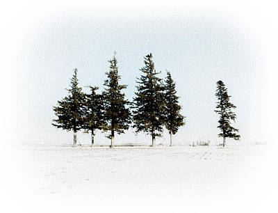 Photograph - 6 Trees by Troy Stapek