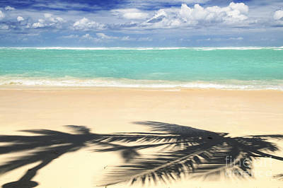Food And Flowers Still Life - Shadows on tropical beach by Elena Elisseeva