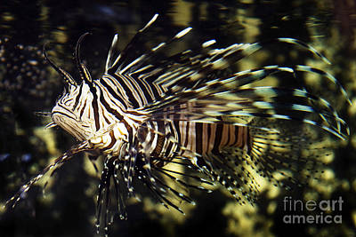 Firefighter Patents Royalty Free Images - Tropical Fish  Royalty-Free Image by Gunnar Orn Arnason