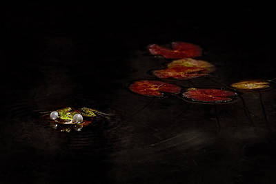 Amphibians Wall Art - Photograph - Untitled by Antonio Grambone