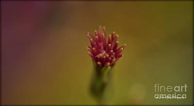 Photograph - Wildflowers by Janice Spivey